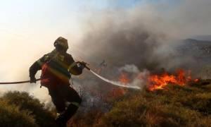Φωτιά ΤΩΡΑ: Πυρκαγιά στην περιοχή Άνω Καλλιθέα Αχαΐας