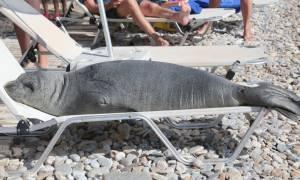 Σάμος: Το θάνατο της Αργυρώς επιβεβαιώσε το Ινστιτούτο «Αρχιπέλαγος»