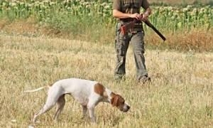 Η παράξενη κλοπή της ημέρας: Έκλεψαν 11 κυνηγετικούς σκύλους αξίας 16.700 ευρώ