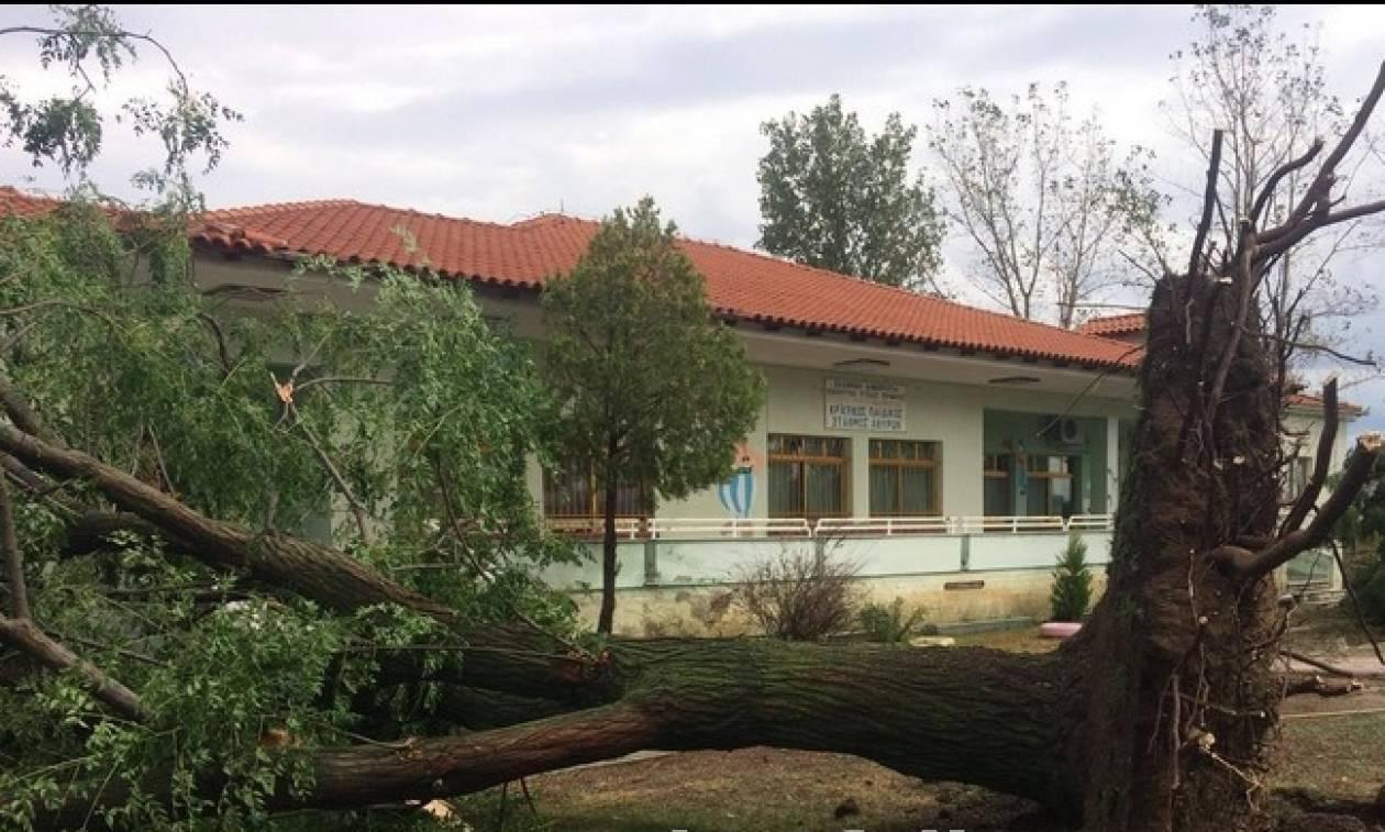 Καταστροφές από την κακοκαιρία που έπληξε την Πέλλα – Δέντρα έπεσαν πάνω σε σπίτια (pics & vid)