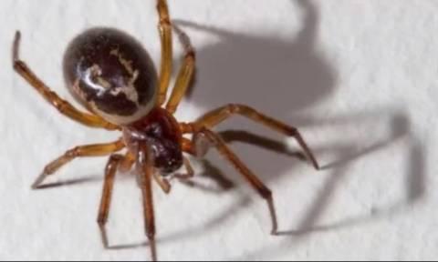 Τον δάγκωσε δηλητηριώδης αράχνη! Αυτό που έκανε 4 μέρες μετά στο σώμα του δεν το φαντάζεστε (video)