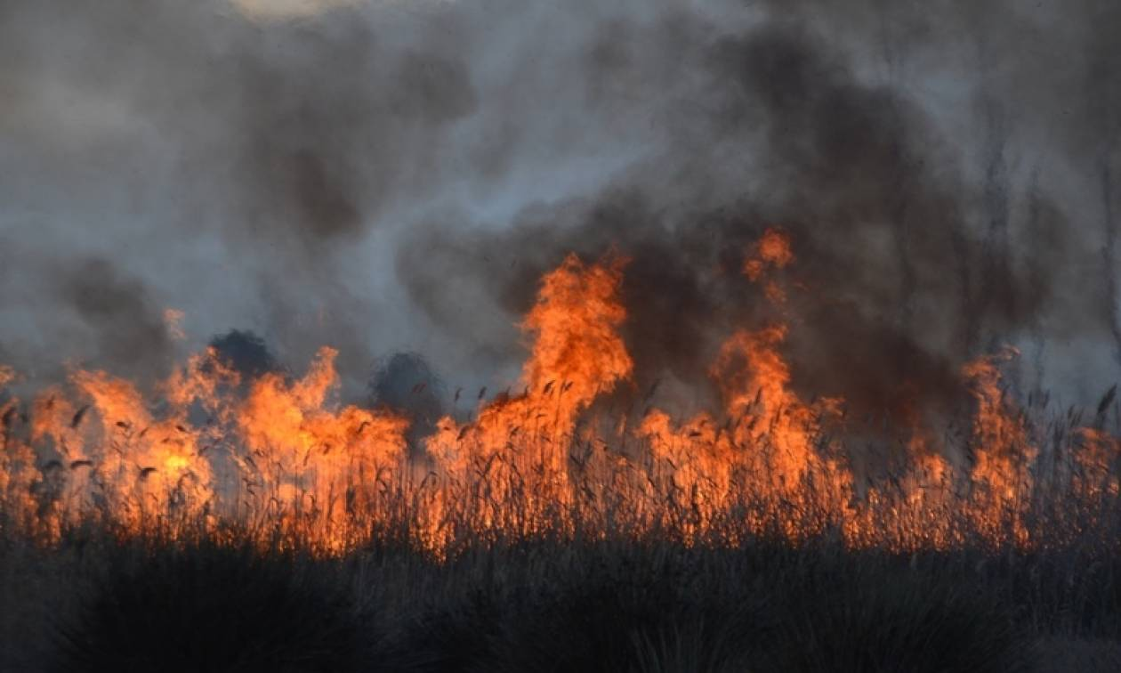 Φωτιά μαίνεται ΤΩΡΑ στη Μεγαλόπολη