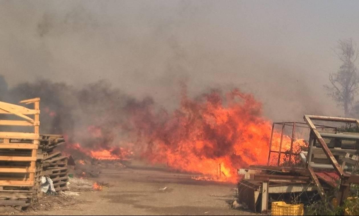 Φωτιές ΤΩΡΑ: Πύρινα μέτωπα σε Ηλεία και Κέρκυρα - Απειλούνται σπίτια