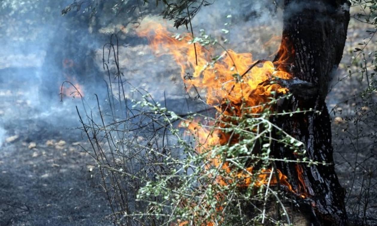 Σε ύφεση οι φωτιές στα Κανάλια και τους Λάκωνες