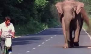 Ελέφαντας παίρνει στο κυνήγι ποδηλάτη. Λίγο αργότερα, όλοι κατάλαβαν το λόγο... (video)