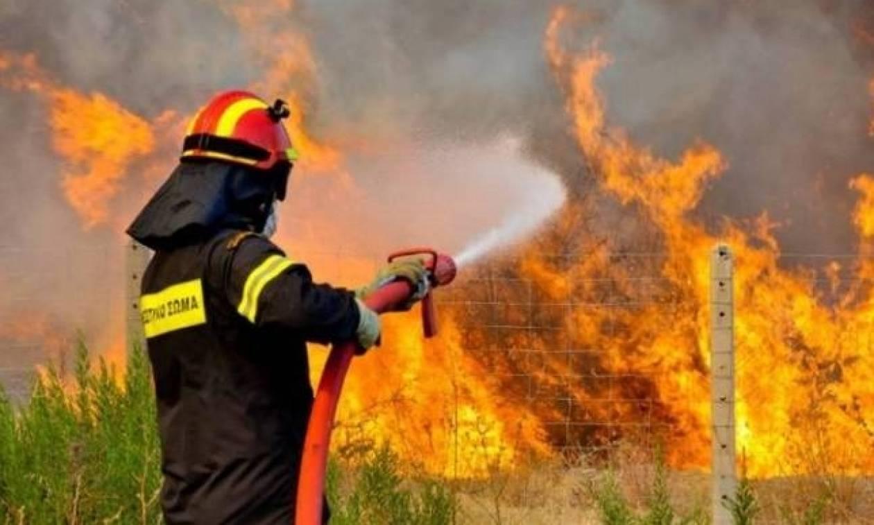Φωτιά ΤΩΡΑ στη Λούτσα (vid)