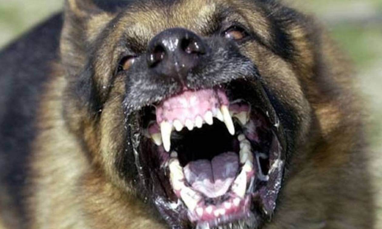 Ανατροπή στην υπόθεση του Μάριου που τον σκότωσε ο σκύλος του - Αυτή ήταν η αιτία που του επιτέθηκε