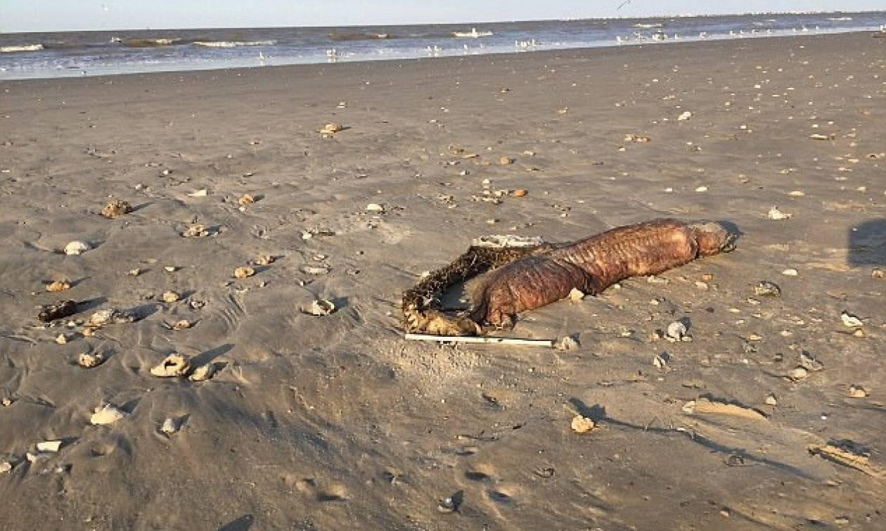 Μυστηριώδες πλάσμα ξεβράστηκε σε παραλία του Τέξας μετά τον τυφώνα Χάρβεϊ! (pics)