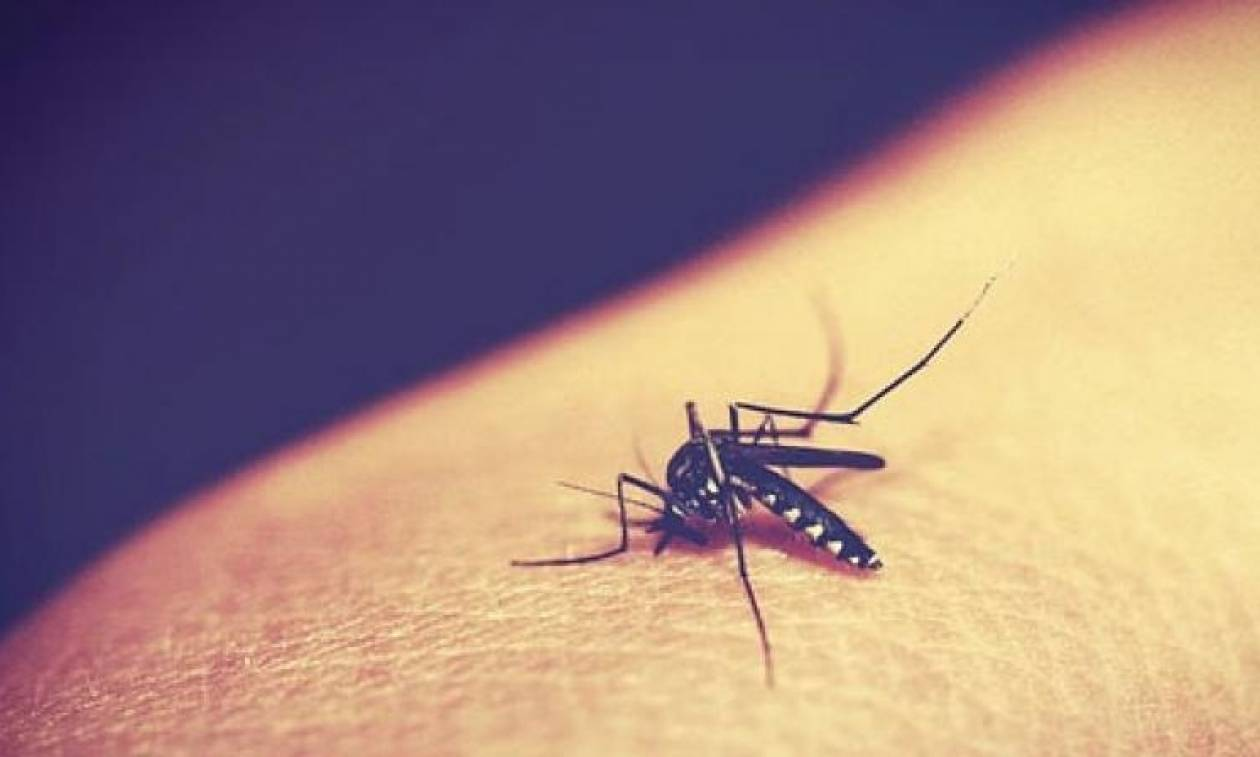 Ιταλία: Συναγερμός στη Ρώμη λόγω ιού που μεταδίδεται από κουνούπια-τίγρεις