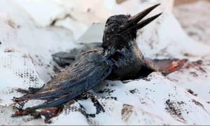 Μόλυνση Σαλαμίνα: Η σοκαριστική φωτογραφία της μικρής Αλκυόνης