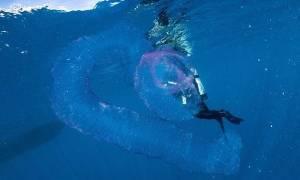 Προσοχή! Μήπως είδατε αυτό το πλάσμα την ώρα που κολυμπούσατε;