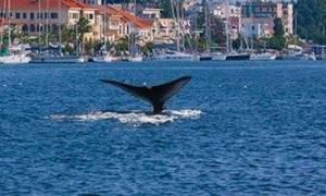 Κρήτη: Συναγερμός στο Λιμενικό για φάλαινα
