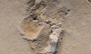 Στη Θεσσαλονίκη βρέθηκαν τα κλεμμένα απολιθώματα της Κισσάμου