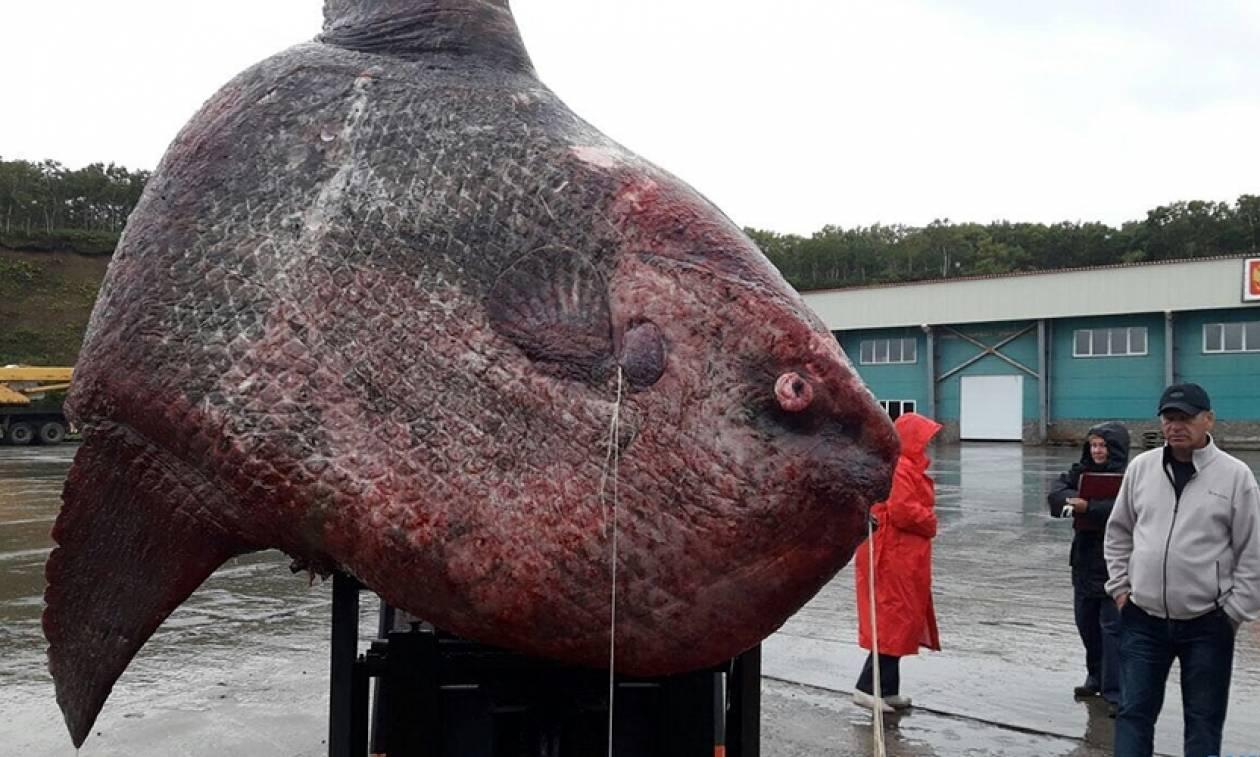 Ρωσία: Έπιασαν ψάρι... γίγαντα βάρους ενός τόνου! (pics)