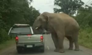 Ελέφαντας όρμηξε σε αυτοκίνητο για να κλέψει φαγητό (vid)