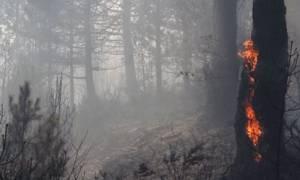 Φωτιά στην Ηλεία: Υπό μερικό έλεγχο το ένα από τα δύο πύρινα μέτωπα