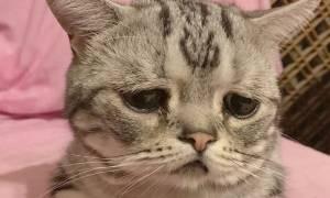 Αυτή είναι η πιο θλιμμένη γάτα που έχετε δει… και θα την αγαπήσετε (pics)