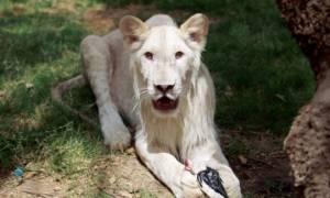 Η θεωρία των άκρων και στα ζώα: Τα πιο μεγάλα και τα πιο μικρά κινδυνεύουν περισσότερο με εξαφάνιση!