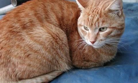 Ακόμα και ο κτηνίατρος έπαθε σοκ. Δεν φαντάζεστε τι... ζούσε μέσα στη μύτη μιας γάτας (video)