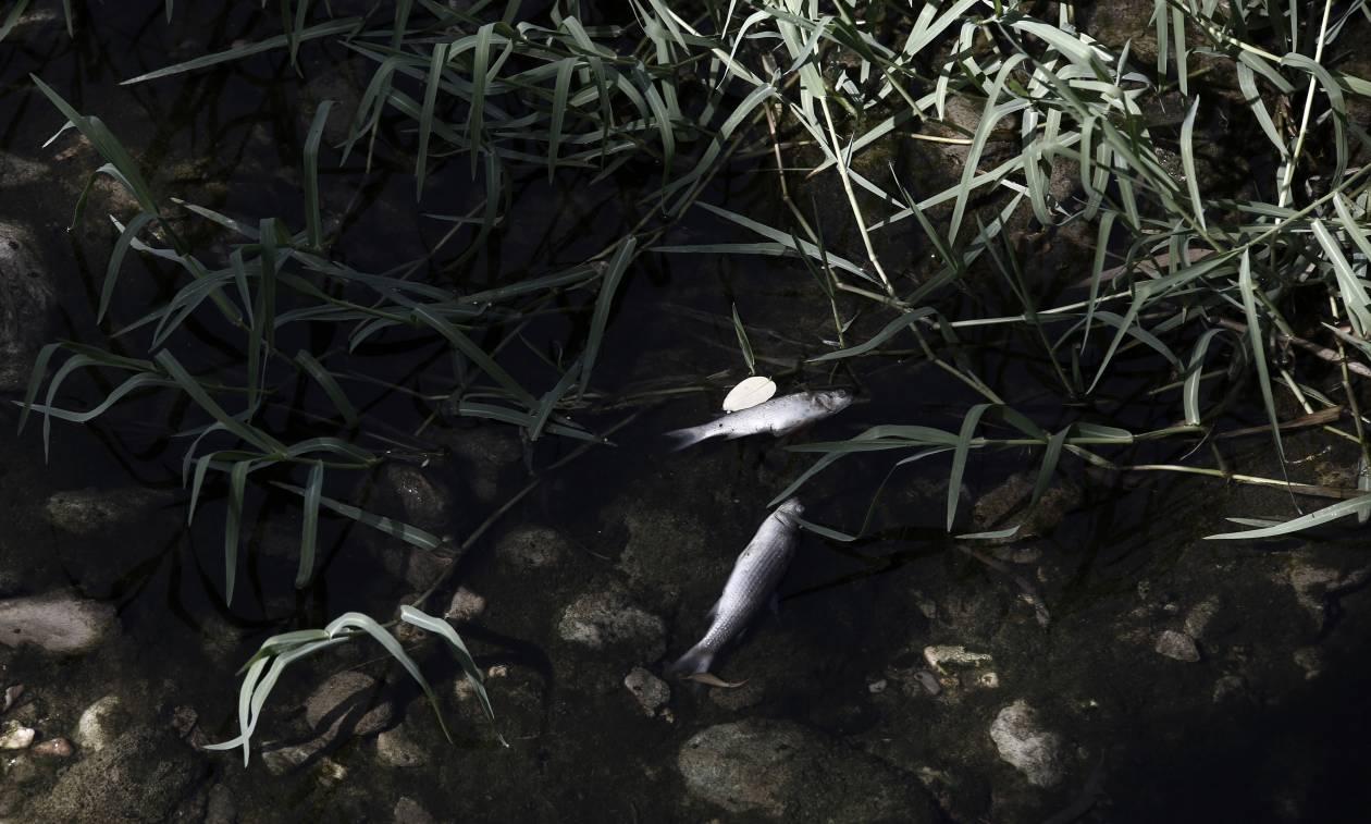 Τοξική «βόμβα» η πετρελαιοκηλίδα στο Σαρωνικό - Το μαζούτ έχει κολλήσει στο βυθό της Γλυφάδας