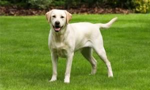 ΣΟΚ! Σούβλισαν σκύλο στο Ηράκλειο Κρήτης