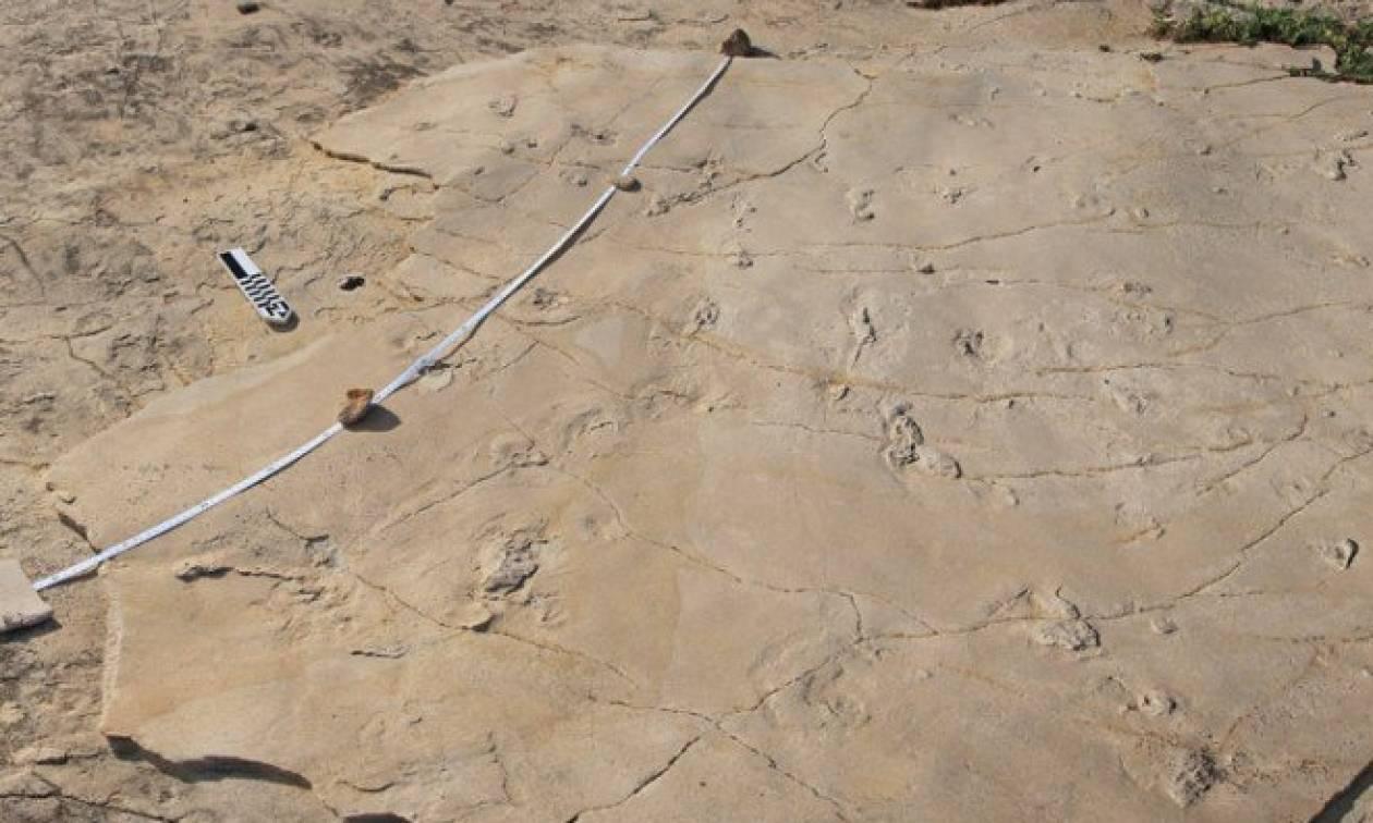 Ο εκπαιδευτικός για την κλοπή των απολιθωμάτων στην Κίσσαμο: Τα πήρα για να διακοσμήσω το σπίτι μου