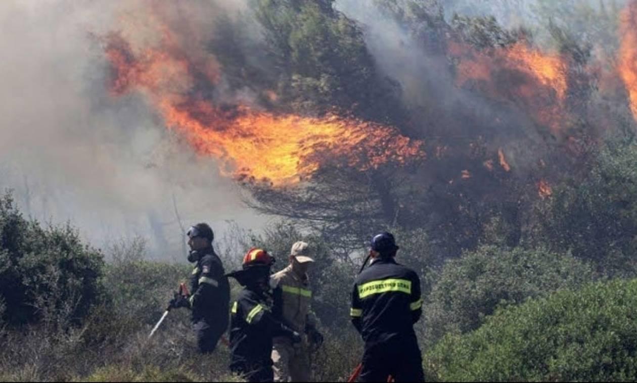 Φωτιά ΤΩΡΑ στη Φθιώτιδα: Μεγάλη πυρκαγιά στον Έξαρχο Αταλάντης