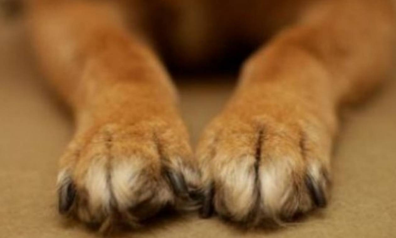 Φυλάκιση ενός έτους σε συνταξιούχο για κακοποίηση υιοθετημένου σκύλου