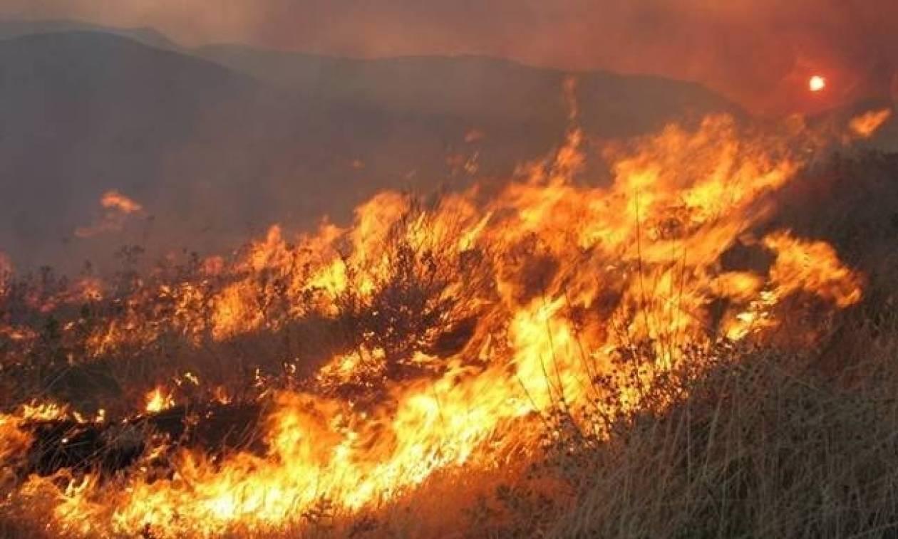 Φωτιά ΤΩΡΑ: Ανεξέλεγκτη για Τρίτη μέρα η πυρκαγιά στο Κούτσι Νεμέας (pic)