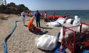 Οικολογική Καταστροφή στο Σαρωνικό: Πρωτοβουλία της Antipollution για πιο άμεσο καθαρισμό!