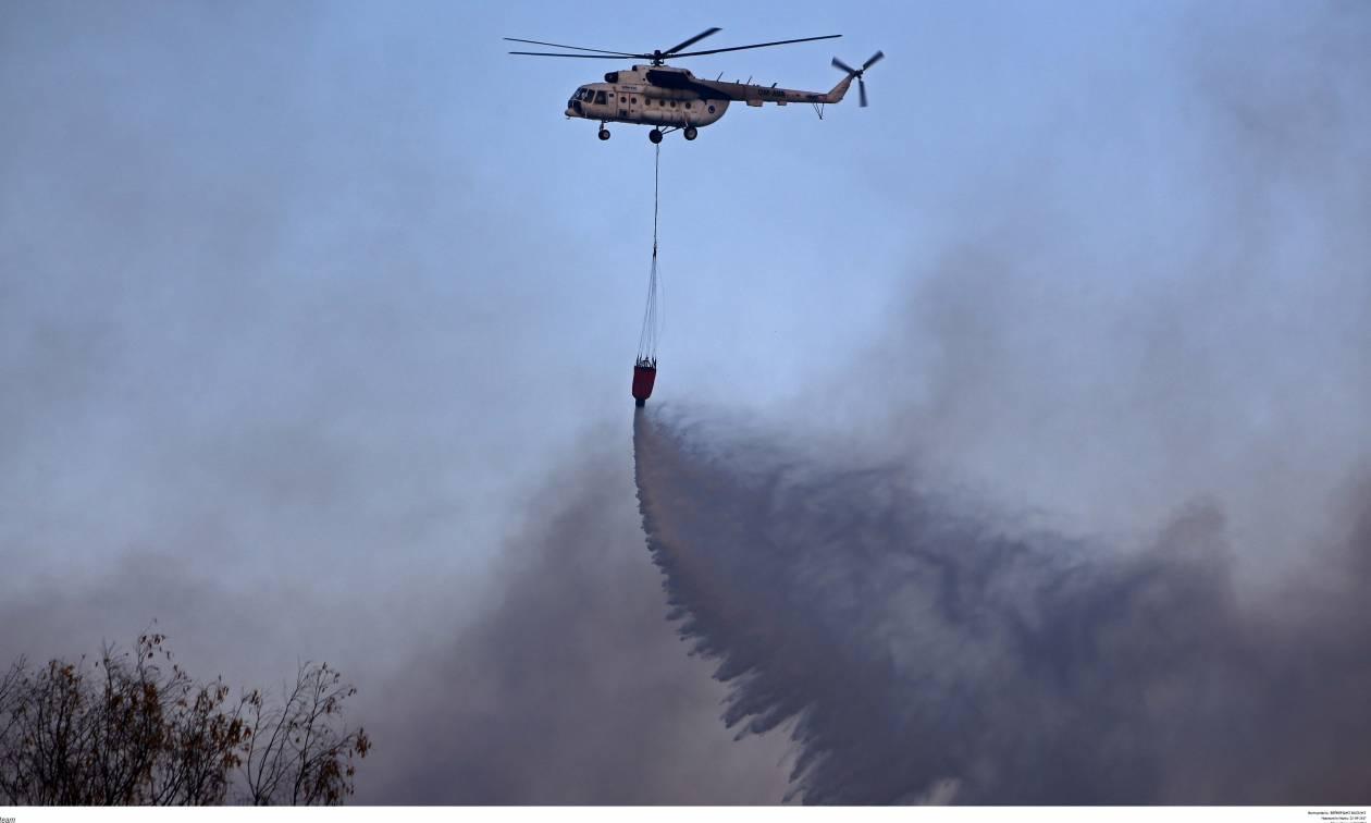 Φωτιά Χαλκιδική: Υπό μερικό έλεγχο η πυρκαγιά - Στάχτη χίλια στρέμματα δάσους