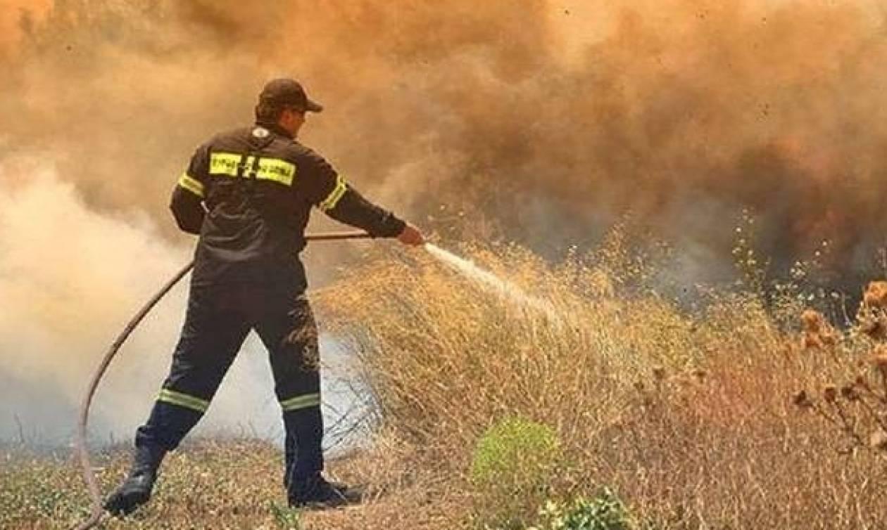 Φωτιά στην Ηλεία: Μέσα στο χωριό Μάκιστος η πυρκαγιά - Μάχη με τις φλόγες (pics)