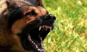 Αυτή είναι η Βρετανίδα τουρίστρια που κατασπάραξαν σκυλιά στη Ροδόπη (Pics)