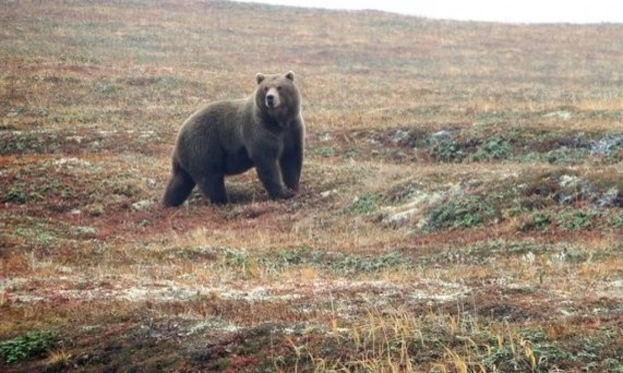 Φρικτός θάνατος για 6χρονο αγοράκι: Τον κατασπάραξε αρκούδα ενώ έπαιζε