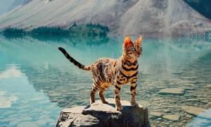 Δεν θα πιστέψετε πόσος κόσμος ακολουθεί αυτή τη γάτα!