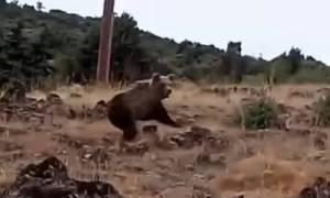 Τρόμος στην Καστοριά: «Είδα τις αρκούδες να έρχονται κατά πάνω μου» - video