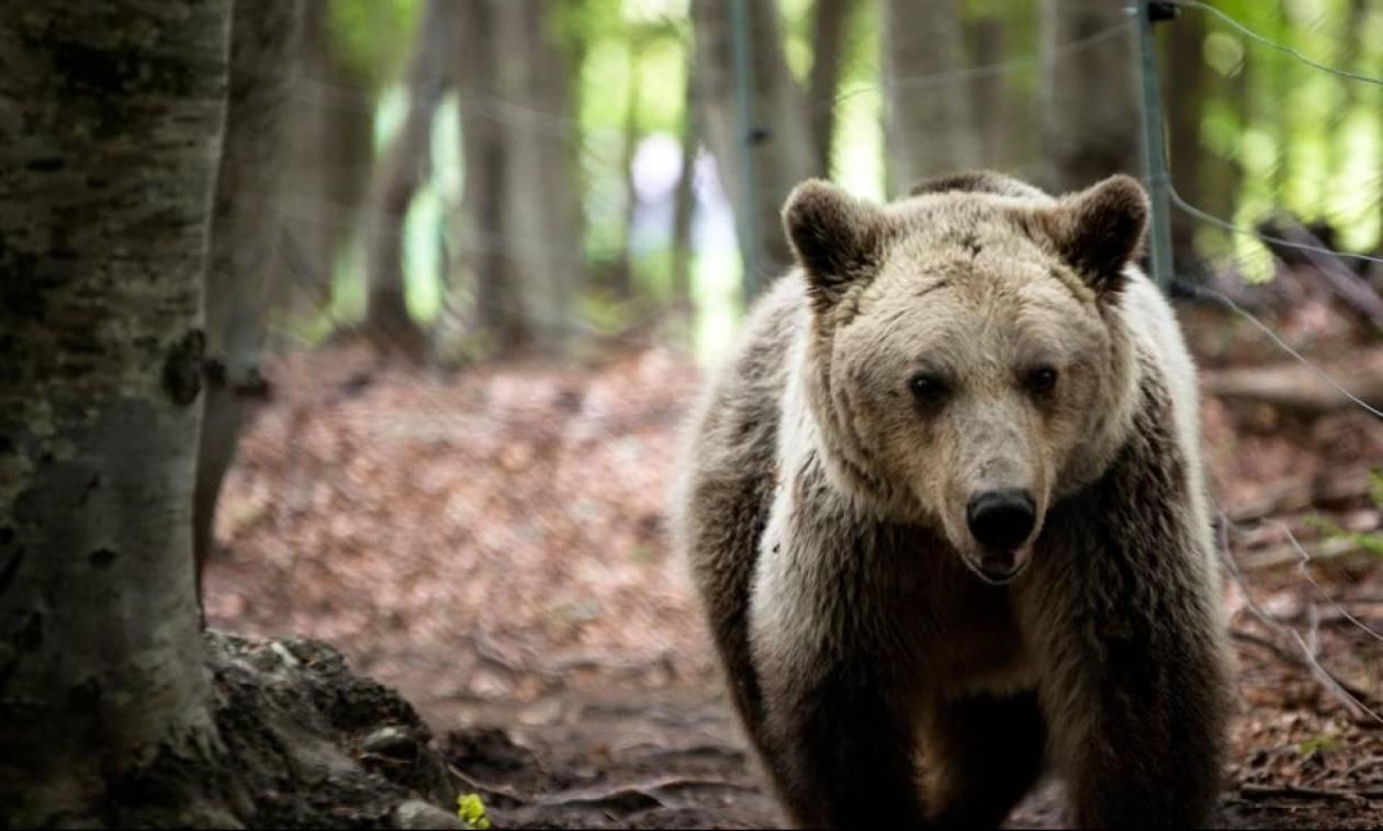 Τρόμος στην Καστοριά: Έβγαλε τον σκύλο του βόλτα και ήρθε αντιμέτωπος με δυο αρκούδες (video)
