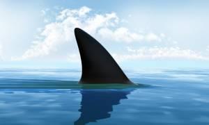 Καρχαρίας επιτέθηκε σε ψαρά και κατασπάραξε το στομάχι του (ΠΟΛΥ ΣΚΛΗΡΕΣ ΕΙΚΟΝΕΣ)