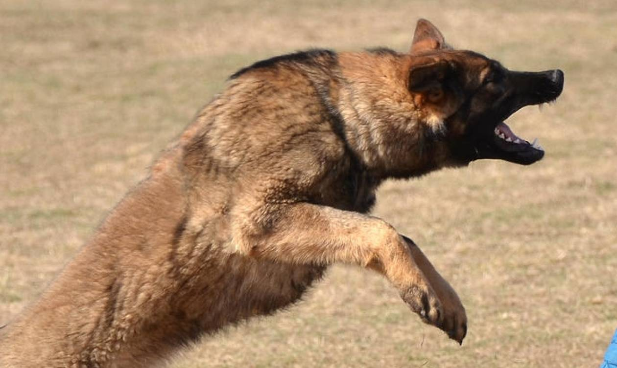 Πάτρα: Αγέλη σκύλων επιτέθηκε σε 56χρονο