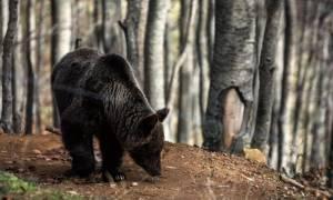 Απίστευτη τραγωδία: Νεκρά δυο παιδιά και ένας άντρας από σφοδρή σύγκρουση αυτοκινήτου με αρκούδα