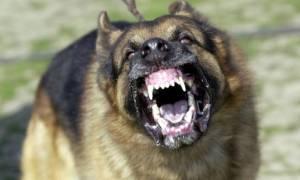 Πανικός στην Πάτρα! Στο νοσοκομείο άνδρας έπειτα από επίθεση τριών σκύλων