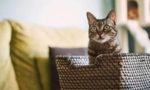 Αδιανόητο! Χάσατε το τηλεκοντρόλ και δε μπορείτε να αλλάξετε κανάλι; Χρησιμοποιήστε τη γάτα σας!