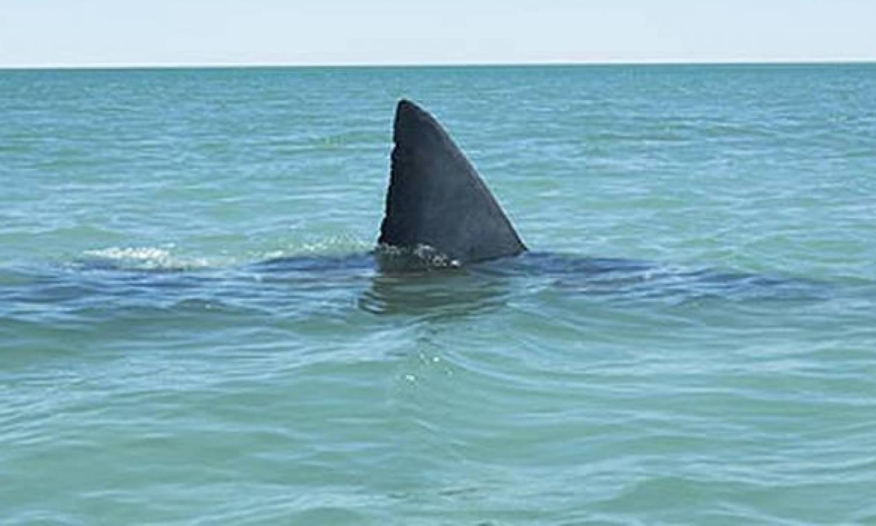Εντοπίστηκε καρχαρίας στην Ελλάδα – Δείτε σε ποια περιοχή (pics)