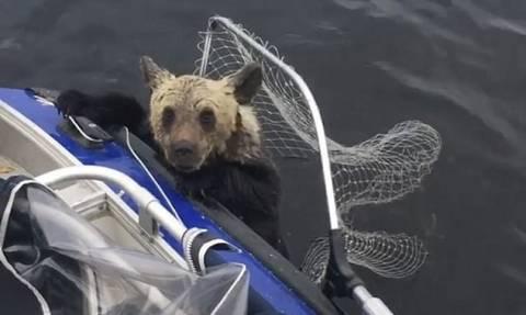 Εντυπωσιακό: Ψαράδες έσωσαν δύο αρκουδάκια από βέβαιο πνιγμό! (vid)