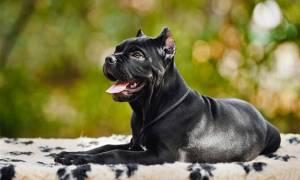 Σκυλιά επιτέθηκαν σε 49χρονη στην Καλαμάτα: «Ένιωσα να μου ξεριζώνει ένα κομμάτι από το πόδι»