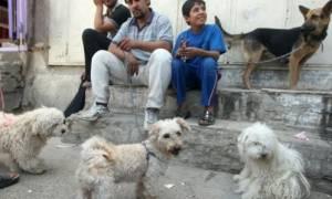 Αυτά τα αδέσποτα ζώα βρίσκουν σπίτι χάρη στους ιστότοπους κοινωνικής δικτύωσης!