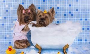 Κάθε πότε πρέπει να κάνω μπάνιο τον σκύλο μου;
