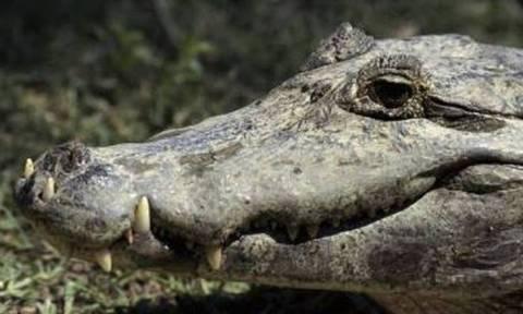 Σοκ στην Αυστραλία: Φόβοι ότι κροκόδειλοι έφαγαν γυναίκα που έπασχε από άνοια