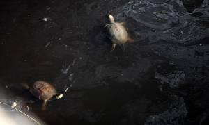 Περιβαλλοντική «βόμβα» στην Κρήτη: Τα βοθρολύματα «έπνιξαν» το Παγκρήτιο
