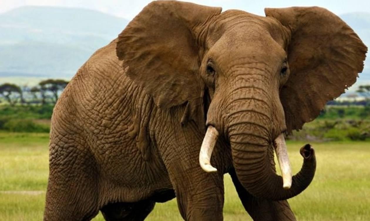 Τραγωδία στο Μπαγκλαντές: Τέσσερις άνθρωποι ποδοπατήθηκαν από ελέφαντες ενώ κοιμούνταν